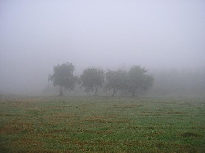 En algún punto del Camino del Norte en Galicia